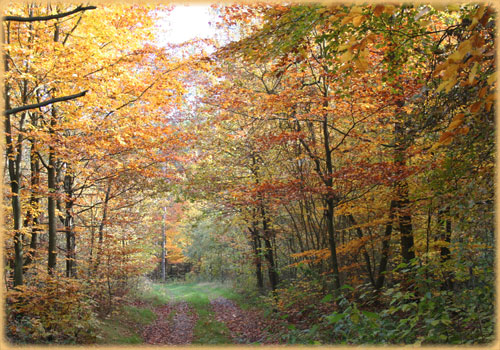 Spätsommer geht in den Herbst über.